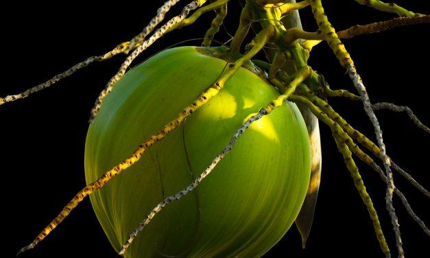 Anwendungstipps für Kokosöl